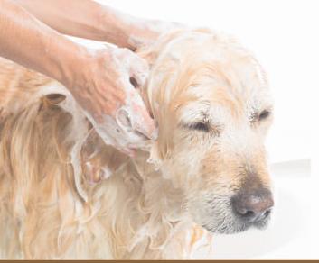 トリミング工房Shampoo